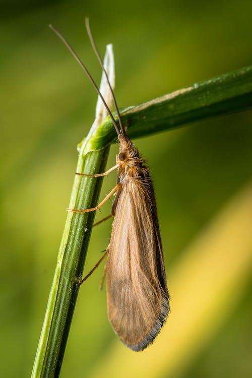 Бесплатное стоковое фото с бабочки, выборочный фокус, глубина резкости, дикая природа