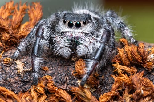 Close-Up Photo of Spider