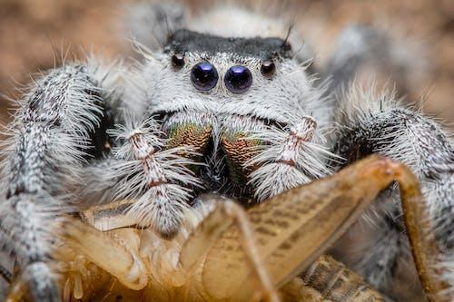 Macro Photography of Gray Spider