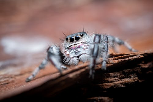 Close-Up Photo of Spider on Brown Wooden Surface