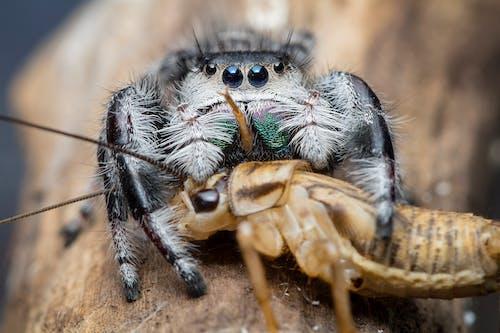Photos gratuites de alimenter, arachnide, araignée, arrière-plan flou