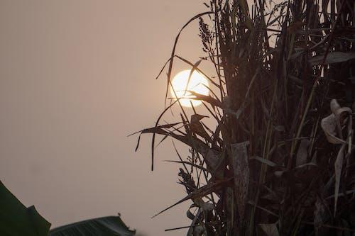 Free stock photo of meeting sunrise, morning light, morning sun