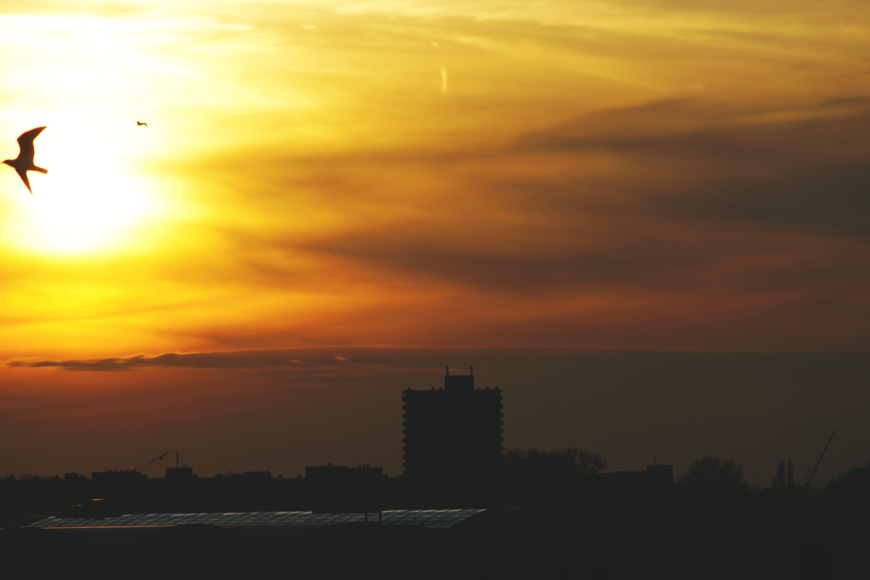 backlit, city, dawn