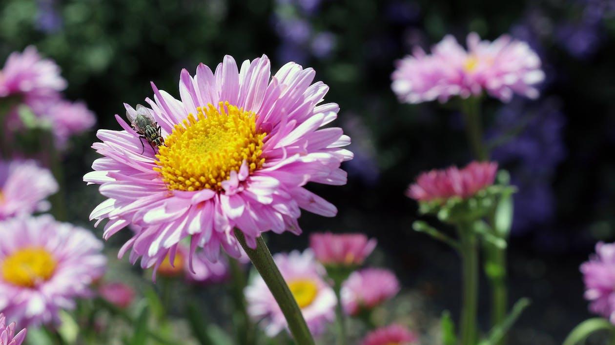 kert, lila virágok, növényvilág