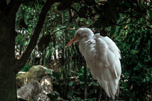 Δωρεάν στοκ φωτογραφιών με δέντρα, ζώο, ξύλο, φτέρωμα