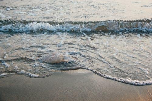 Kostenloses Stock Foto zu bucht, küste, meer, meeresküste