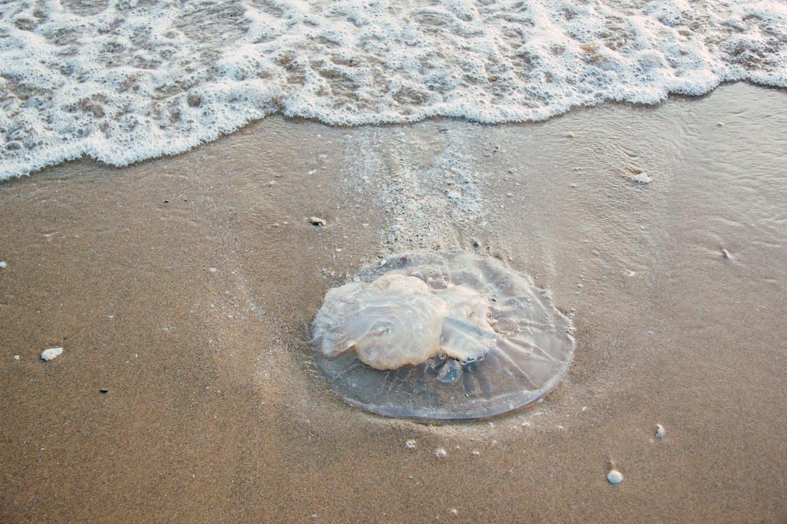 Sand Dollar on Shore