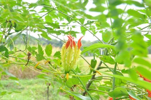 Fotos de stock gratuitas de flor encantadora
