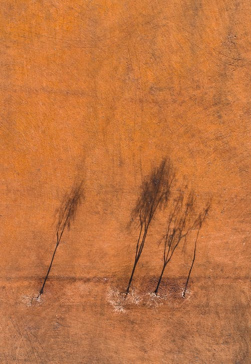 Brown Leafless Trees on Brown Field