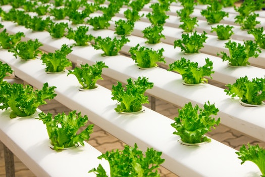 Free stock photo of food, salad, healthy, industry