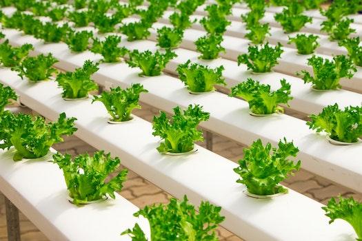 Kostenloses Stock Foto zu essen, salat, gesund, industrie