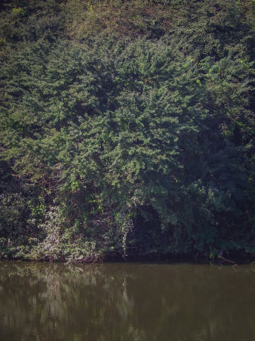 Free stock photo of Green water, river, water, weed