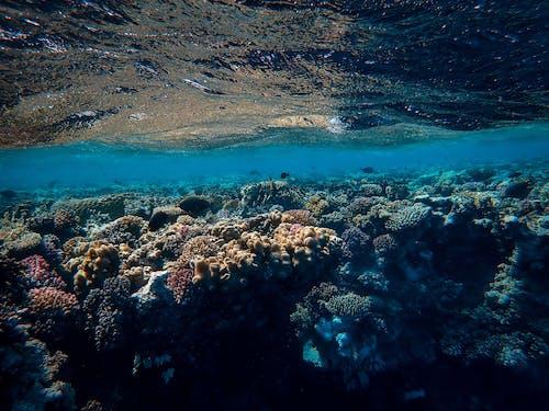 Immagine gratuita di acqua, barriera corallina, corallo, mare