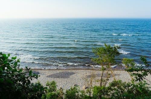 Δωρεάν στοκ φωτογραφιών με Βαλτική θάλασσα, γνέφω, δέντρο, θάλασσα