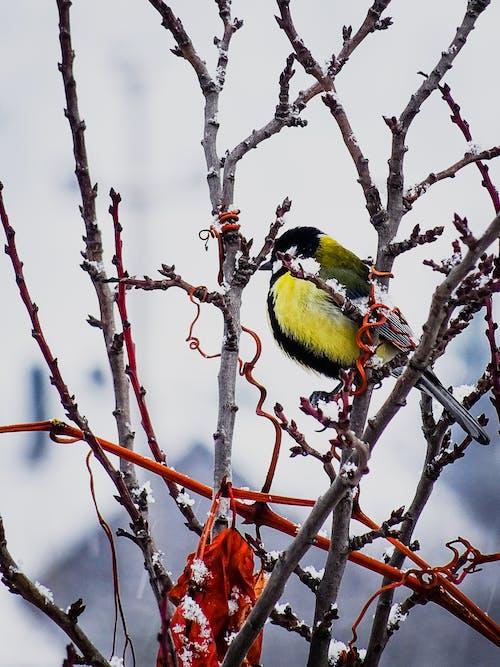 Foto profissional grátis de amarelo, animal, árvore