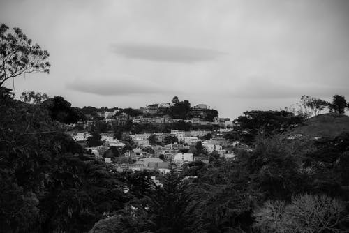 Grayscale Photography of Trees Near Houses