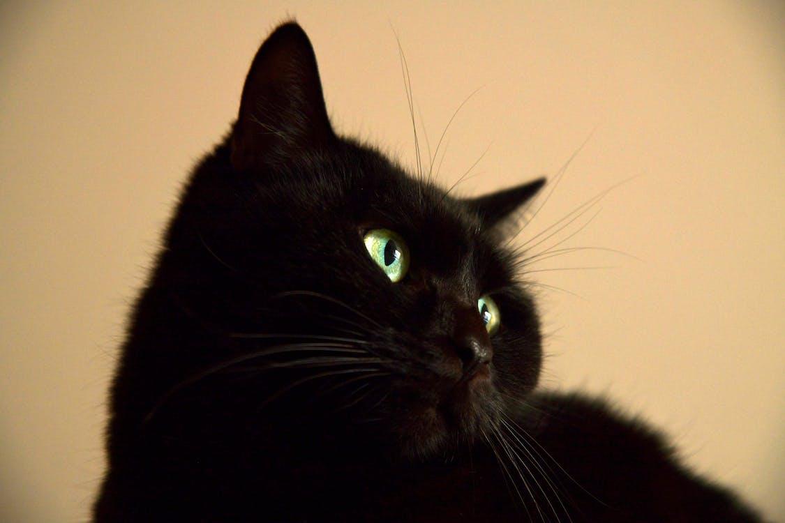 grønne øyne, katt, katt øyne