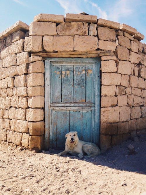 Kostenloses Stock Foto zu eingang, haustier, hund, hündisch