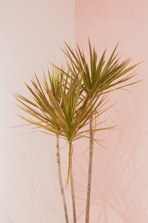 乾的, 增長, 室內植物