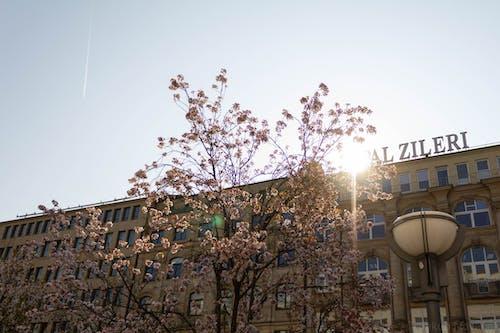 Immagine gratuita di albero, edificio, fiore, leggero