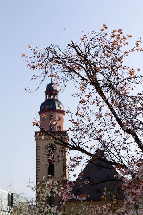 คลังภาพถ่ายฟรี ของ ฤดูใบไม้ผลิ, สว่าง, โบสถ์