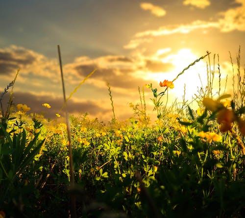 Darmowe zdjęcie z galerii z #sunset #sunsetlovers #sun #country #skylovers #wallpaper