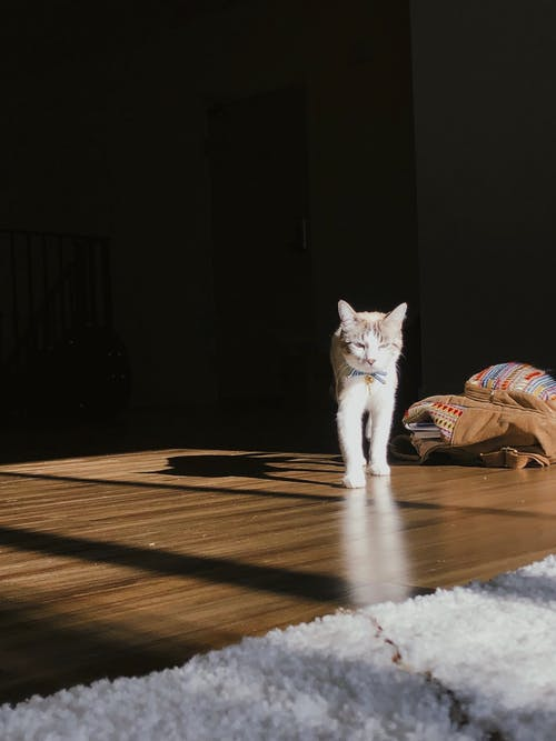 Free stock photo of cat, light