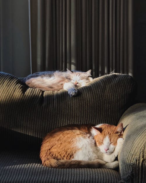 Orange and White Cats Lying on Brown Sofa