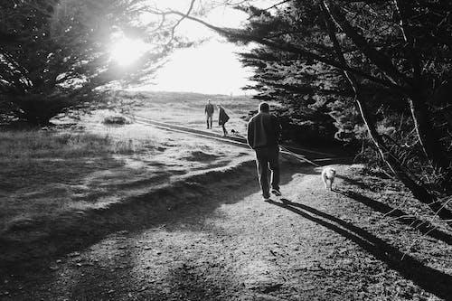 Fotos de stock gratuitas de colina, excursionismo, familia, naturaleza