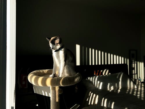 Free stock photo of bedroom, cat, light, sun