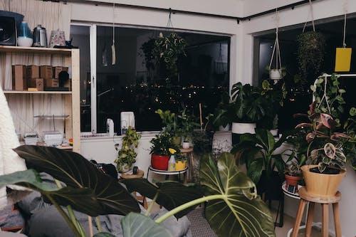 Fotos de stock gratuitas de destello, flash duro, habitación, plantas