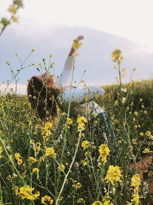 Fotos de stock gratuitas de bailando, campo, flores, serie
