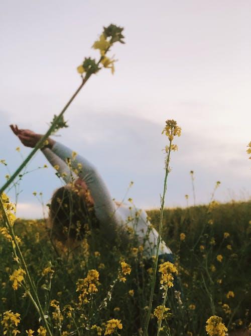 Fotos de stock gratuitas de amigo, bailando, campo, flor