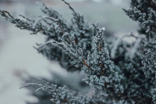 Free stock photo of beautiful, beauty, christmas, cold