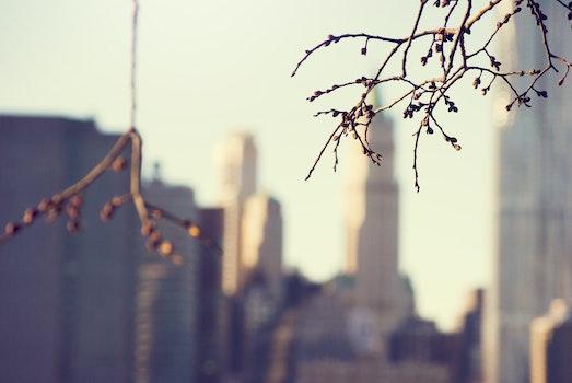 Free stock photo of city, skyline, new york, manhattan