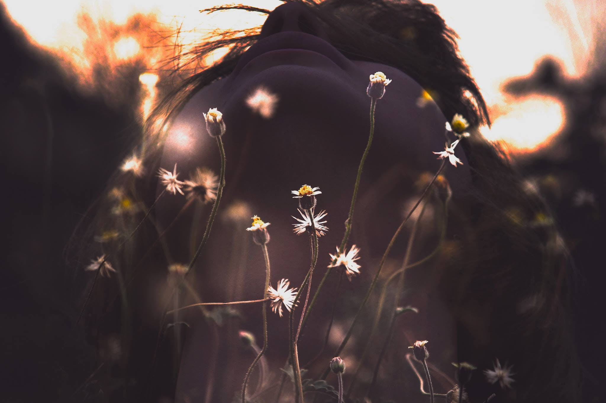 Free stock photo of nature, person, woman, flowers