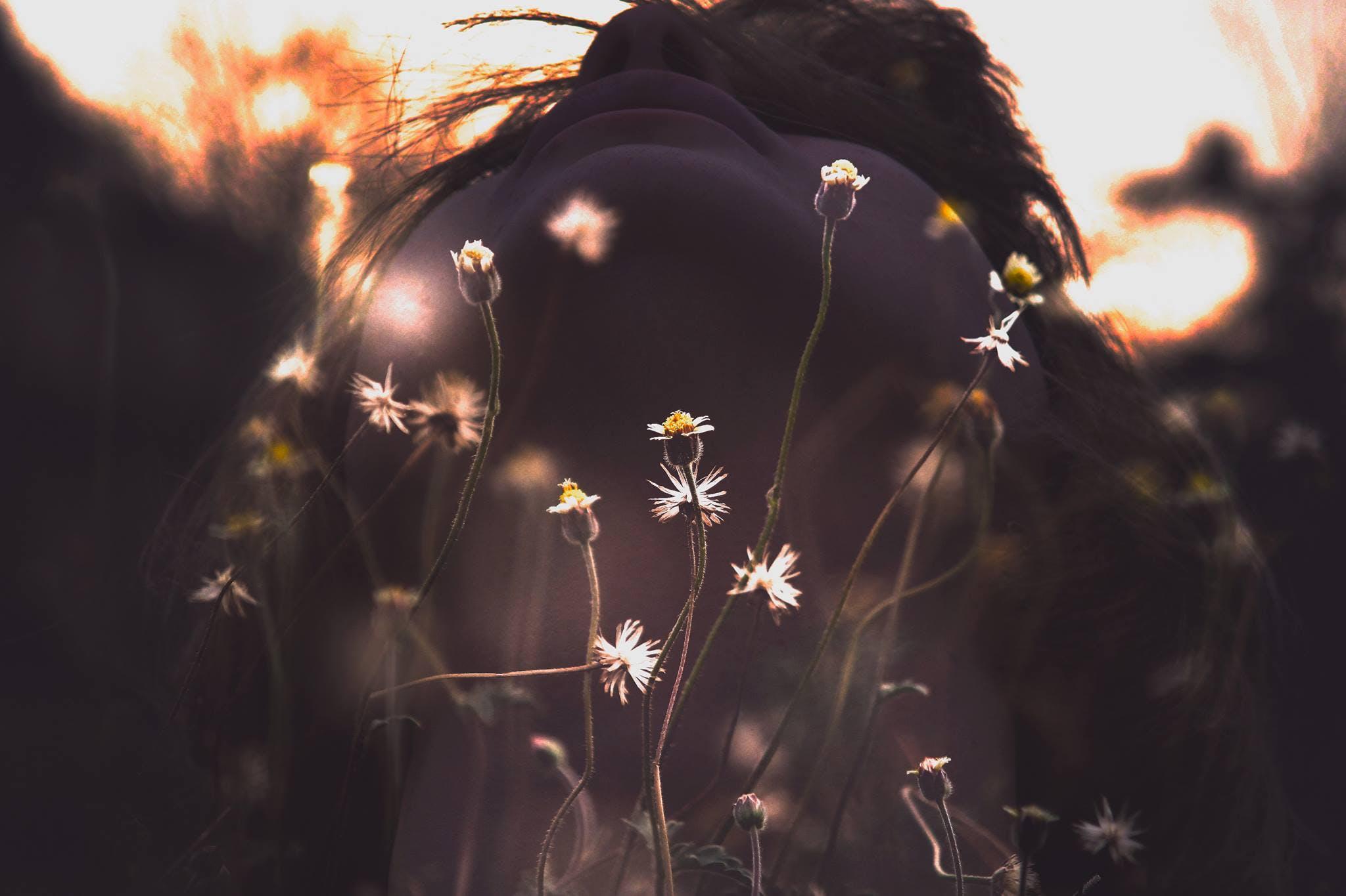 blumen, fokus, fotoshooting
