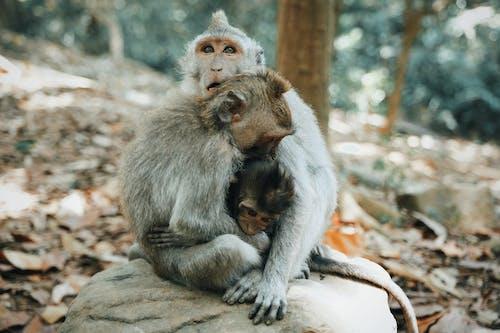 Gratis stockfoto met aanbiddelijk, aap, baby