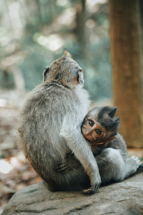 Shallow Focus Photography of Two Primate Near Tree