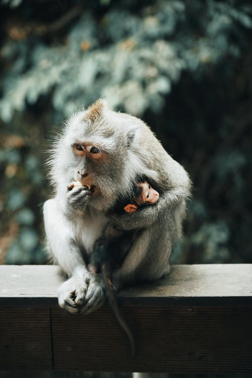 Gray Monkey Sitting on Gray Concrete Surface