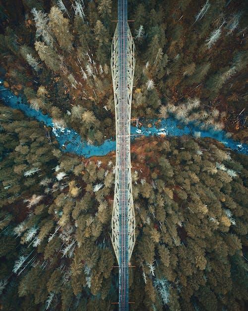 Immagine gratuita di alberi, ambiente, boschi, da sopra