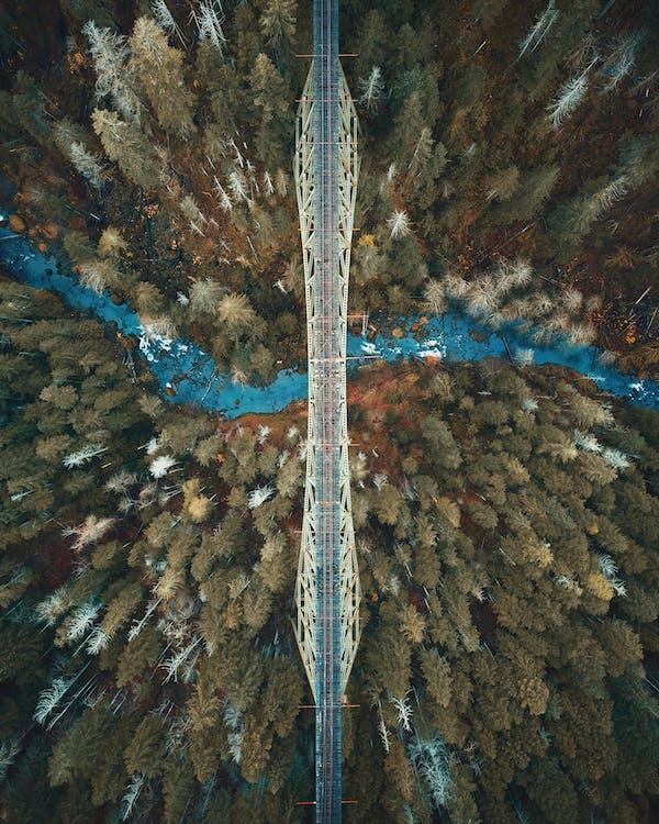 aufsicht, außerorts, bäume