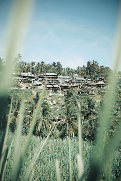 Lush greenery of palms and grass surrounding town with local simple houses in jungle