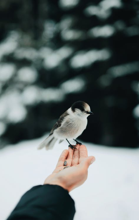 Shallow Focus Photo of Bird on Person's Hand
