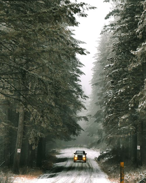 Car driving in solitude down snowy roadway among coniferous green trees in snowfall