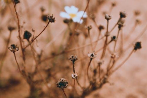 Gratis stockfoto met #nature #flower #summer #warm #day #beautiful