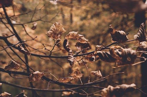 Gratis stockfoto met #warm #forest #autumn #tree #goud #leaves