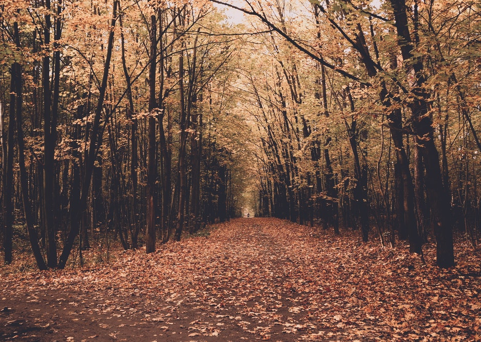 autumn, branch, dawn