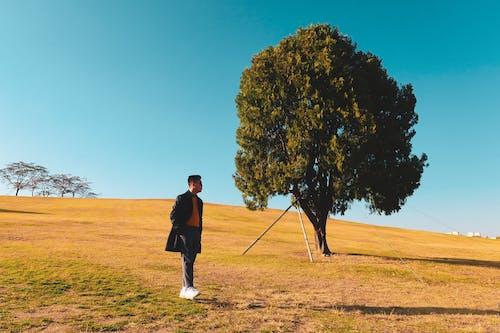 Kostnadsfri bild av ensamt träd, seoul korea