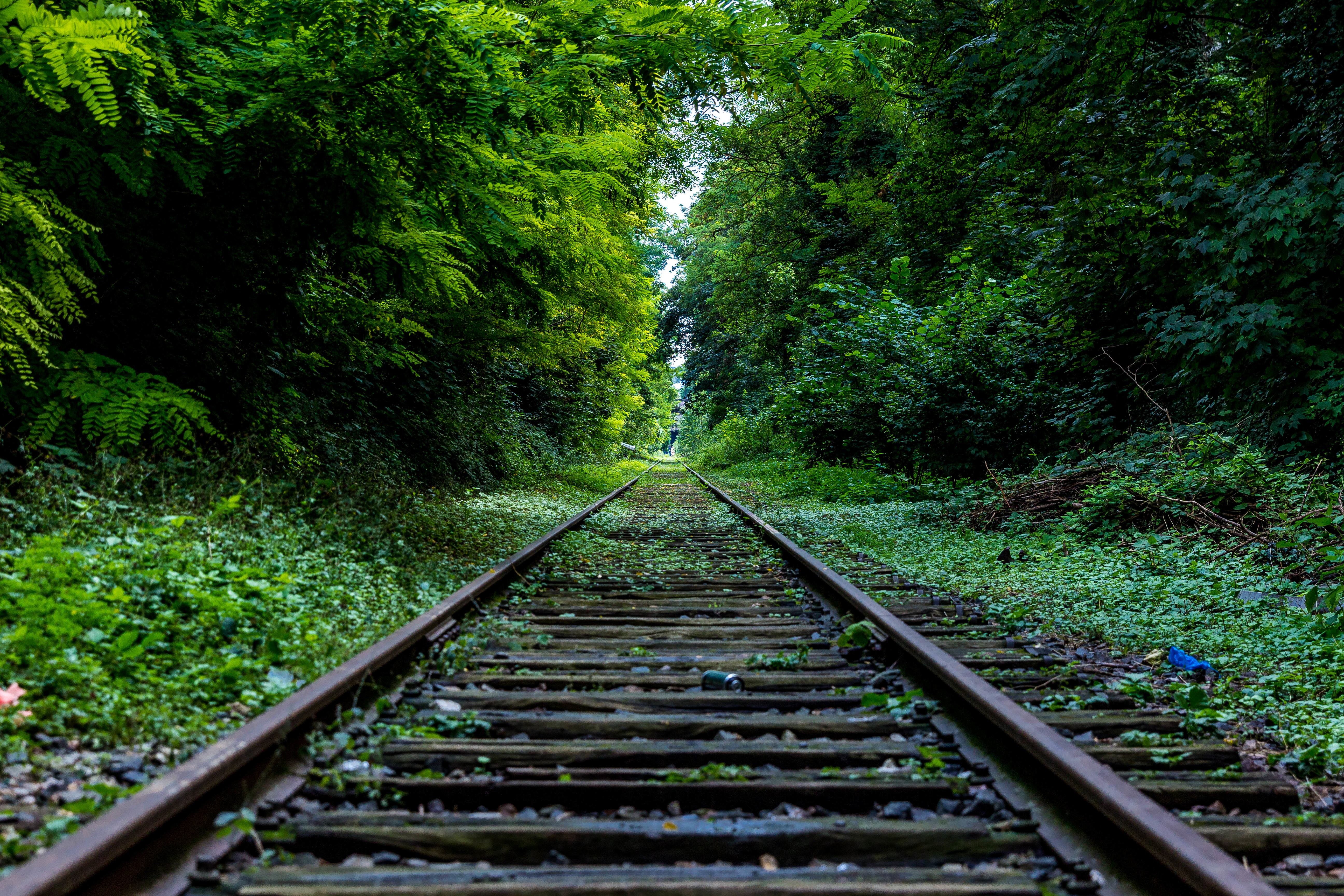 рельсы железная дорога деревья туннель  № 3118444 без смс